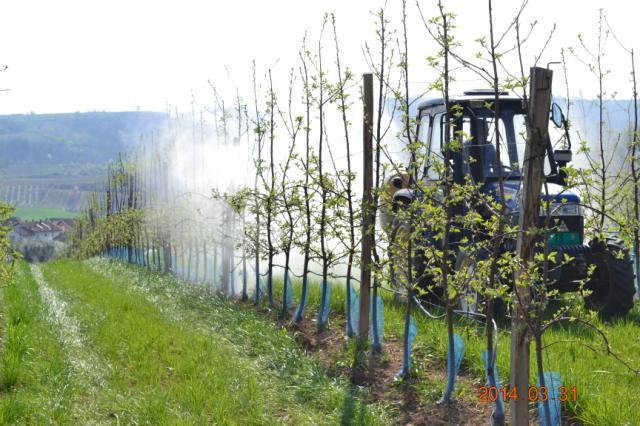 Zaštita jabuke , Lokalitet Mala Drenova